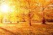 goldener herbst sonnenuntergang 1