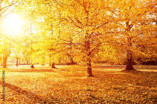 canvas print picture goldener herbst sonnenuntergang 1