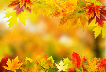 autumn background 1