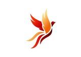 Fototapety bird,logo,phoenix,flying,hawk,eagle,wings,icon,symbol