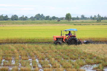 Tractor plowing a rice field