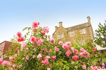 Old, British house with window and climbing roses