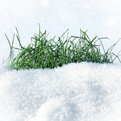Grass on the Snow