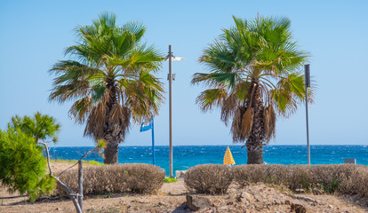 palms in Poetto beach