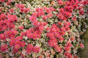 Pretty original red flowers