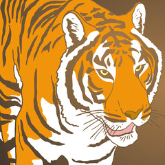 Tiger cover
