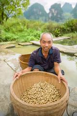 Harvest peanuts