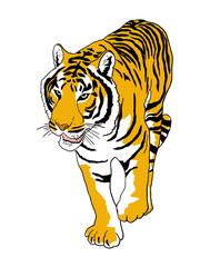 Vector tiger