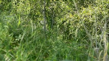 blurred green grass - trees - sun rays - slider