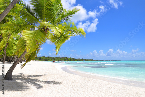 Palm trees and tropical beach - 69580370