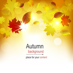 Autumn background with colored leaves and light effect