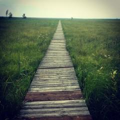 Wood bridge wild landscape horizon background