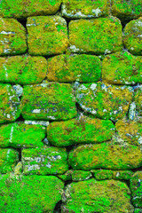 Texture of rock wall overgrown with moss