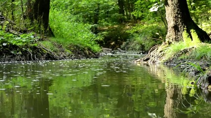 brook in forest - small flys fly above brook - sun