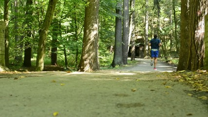 man sports - running - forest: park (trees) - pathway