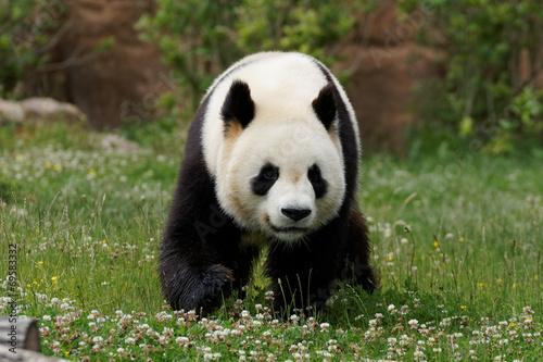 panda-23