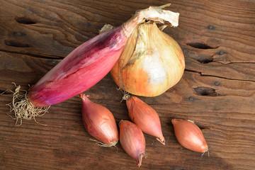 cipolle varietà rosse bio