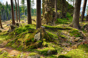 The primeval forest-HDR
