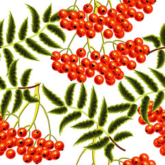 Red rowan berries seamless vector pattern. Template for design.