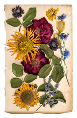 dried flowers over aged paper. herbarium lavender, roses, sunflo