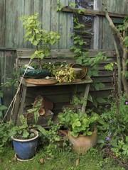 Holzschuppen und Blumenkübel in einem verwilderten Garten