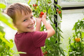 Kindhält eine saftige Tomate