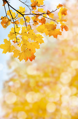 leaf fall abstract background