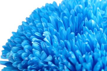 Beautiful blue flower, close up