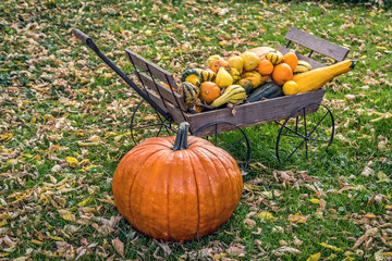 Autumn Pumpkins and Gourds