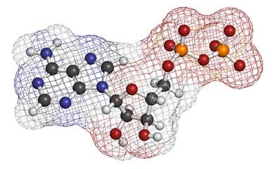 Adenosine diphosphate (ADP) molecule.
