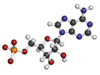Adenosine monophosphate (AMP, adenylic acid) molecule.