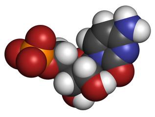 Cytidine monophosphate (CMP, cytidylate) RNA building block