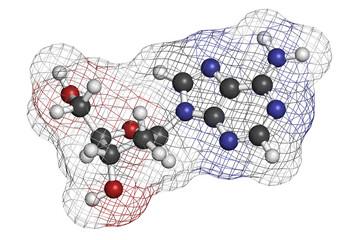 Deoxyadenosine (dA) nucleoside molecule. DNA building block.