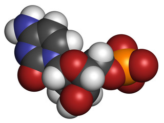 Deoxycytidine monophosphate (dCMP) nucleotide molecule.