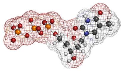 Thymidine triphosphate (TTP) nucleotide molecule.