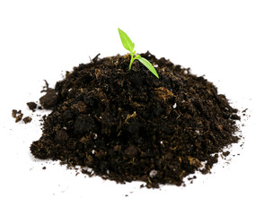 Green plant and soil, isolated on white