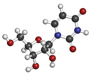 Uridine nucleoside molecule. Building block of RNA.