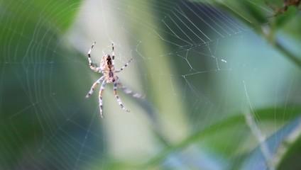 Spinne webt Netz