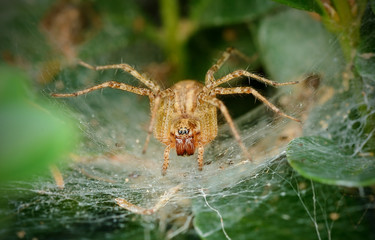 Macro photo of a small spider