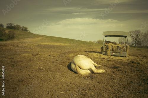 canvas print picture Pferde