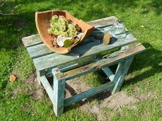 Kleine Holzbank mit zerbrochenem Tontopf und Sempervivum