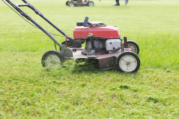 working of lawn mover cutting grass leaves  on garden  field