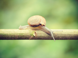 snails old retro vintage style