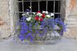 flower in the vase