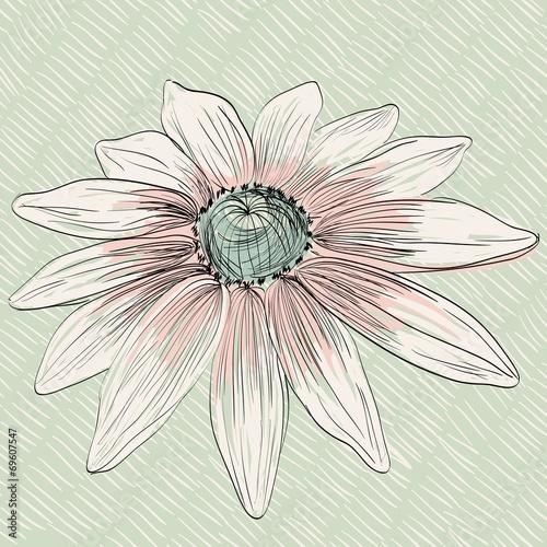 flower © Tapilipa