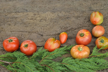 Organically grown  tomatoes background