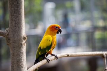 Colorful small  parrot on the branch