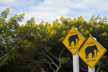 Elephant crossing warning sign in the park
