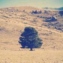 Lone Tree Instagram Style