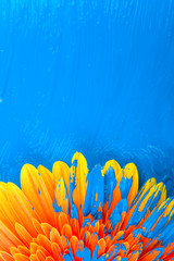 Gerbera with paint